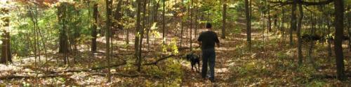 walk in autumn woods